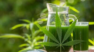 Formulating CBD Drug Delivery Systems with Functional Lipids